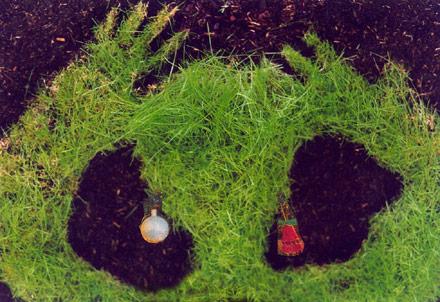 Sonnwend Gras