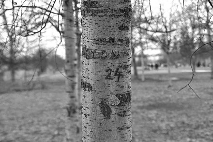 Kommentar zu Baumfällungen der Wasserbetriebe