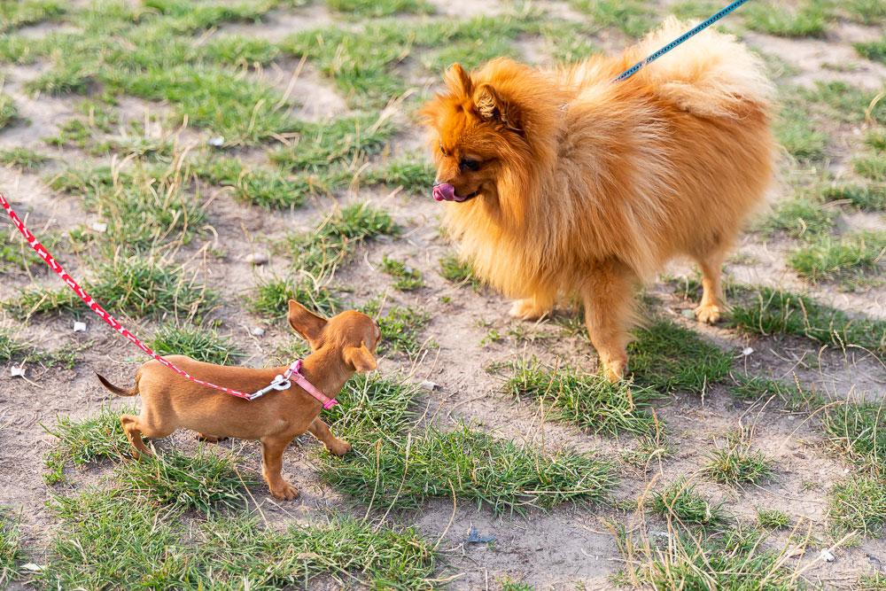 Wie läuft's mit Hund im Park?